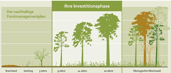 Schaubild Holzinvestment